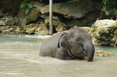 Baby elephant enjoy playing water at rivers streams Stock Photo