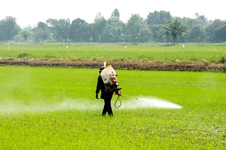 農家は、田んぼの虫を防ぐために殺虫剤を注入します。