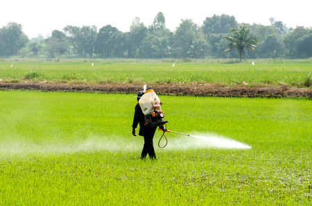 농부들은 논에서 곤충을 방제하기 위해 살충제를 주입합니다. 스톡 콘텐츠 - 92437097