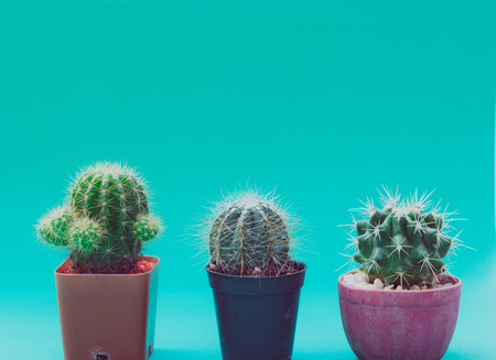cactus in pot on wooden table. Tone retro Stock Photo