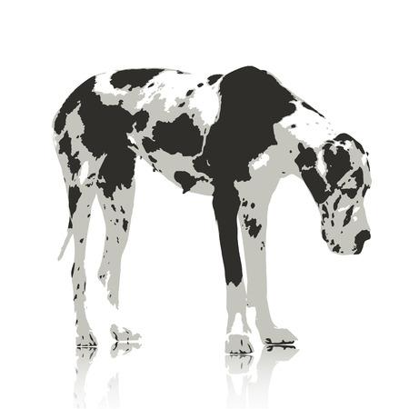jowl: Labrador Retriever dogs Water color Stype on White Background. Vector  illustration