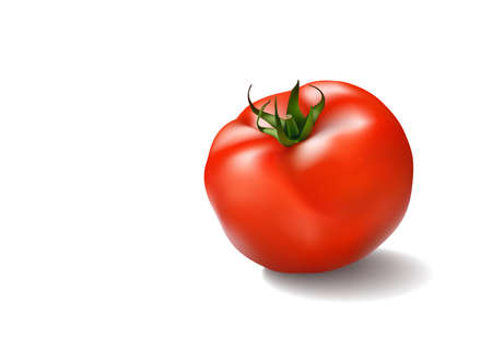 Vector illustration of big ripe red fresh tomato isolated on white background. Vector illustration. Ilustrace