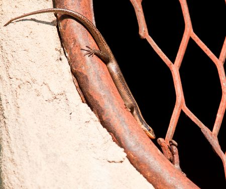 expanded: Lizard resting on round window with iron grill Stock Photo