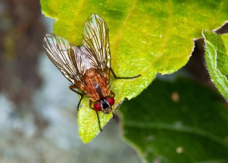 insectiside: Macro of a brown fly sitting on a green leaf