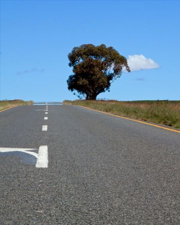 Road over farm lands with tree in South Africa qnd bright blue sky Stock Photo - 7104366