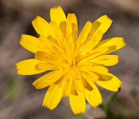 Macro of a yellow flower on a green background photo