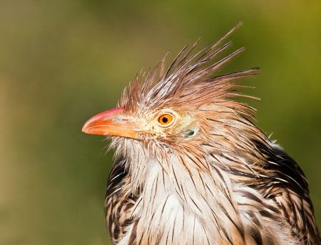 Brown bird with a bad hair day in the sunshine Stock Photo