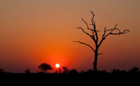 African sunset with a tree silhouette photo