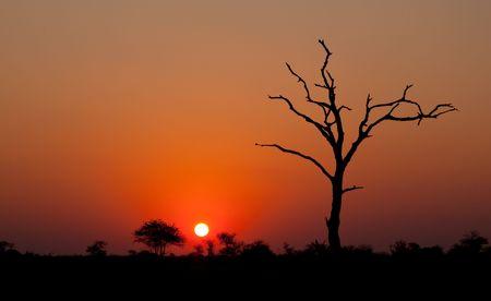Tramonto africano con una silhouette di albero  Archivio Fotografico - 7584715