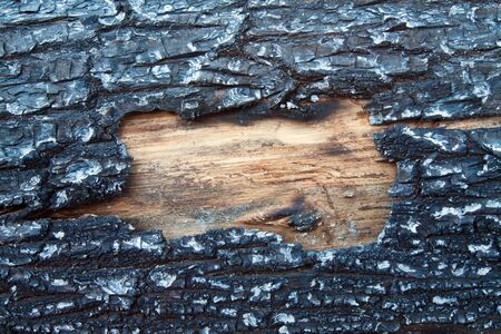 Structure of a burned tree with clean wood that is visible photo