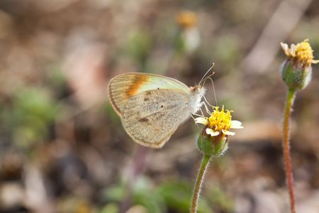 Butterfly sitting on bright yellow flower sucking nectar photo