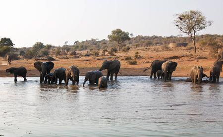 pozo de agua: Elefante de los reba�os bebida en la charca en �frica Foto de archivo