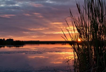 jezior: Wschód słońca widziany przez trawy z promieniami słońca widoczne Zdjęcie Seryjne