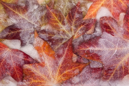 Frozen autumn leaves creating an ice cold feeling Stock Photo