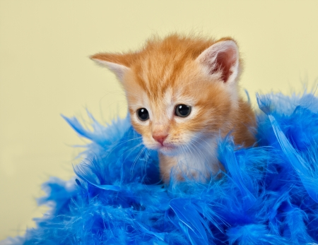 Cute and adorable kitten surrounded with blue feathers with a yellow background