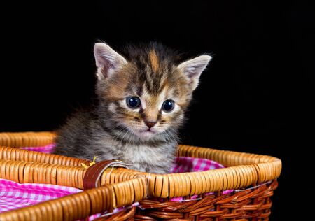 Cute kitten sitting in a small basket against a black background photo