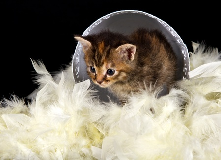 Kitten walking out of white basket on a bed of feathers photo