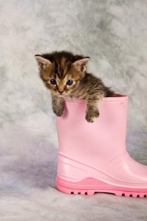 Kitten in water shoe kitten gumboot flower funny photo