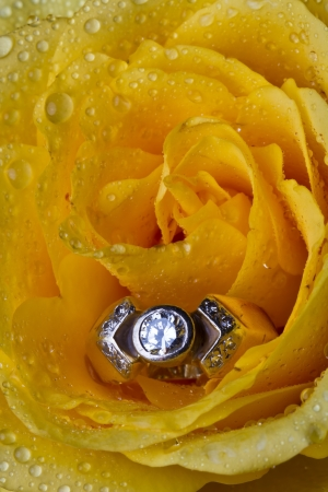 Yellow rose with ring macro wet drops detail soft light photo