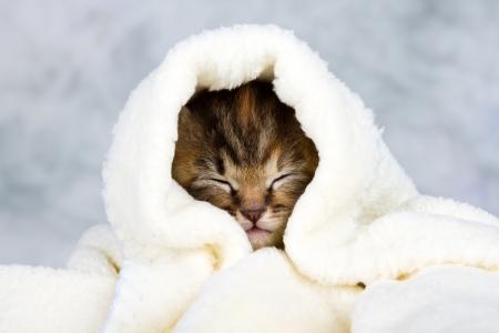 Kitten closed in towel warm sleepy small white