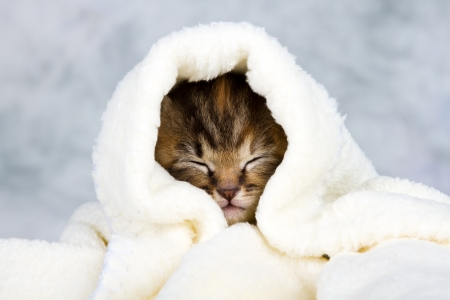 sleepy: Kitten closed in towel warm sleepy small white