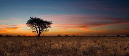 Bella tramonto nel Kalahari con albero morto e colori vivaci Archivio Fotografico - 20990358