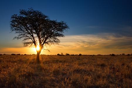 toter baum: Schöne Sonnenuntergang in der Kalahari mit toten Baum und hellen Farben Lizenzfreie Bilder
