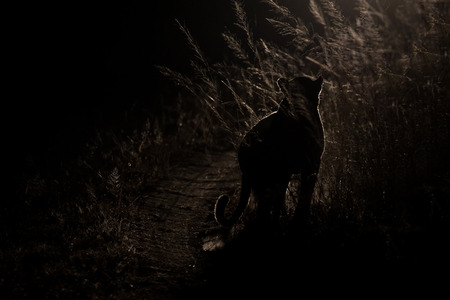 Dangerous leopard walk in the darkness to hunt for prey artistic conversion