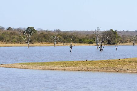 the game reserve: Dead trees in a waterhole of game reserve in Africa Stock Photo