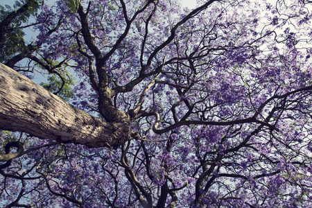 Jacaranda tree trunk with small flowers and the sky Reklamní fotografie