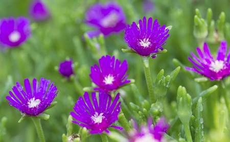 small purple flower: Macro of a small purple flower with a green background Stock Photo