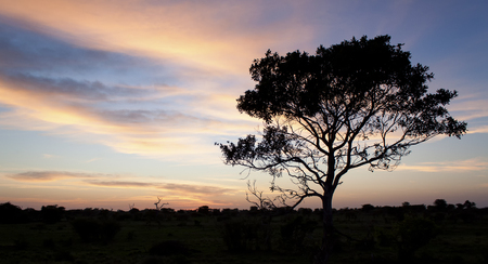 Kalahari sunset with trees grass and blue sky and road Stock Photo