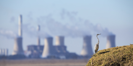 Landscape with a Grey Heron and a power station with pollution in the background Stock Photo