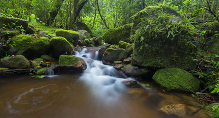 Small stream in a forest flowing through moss and fern covered rocks