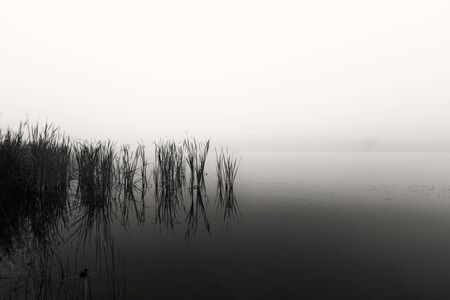 Landscape of a lake with reeds in still water on a foggy morning Standard-Bild