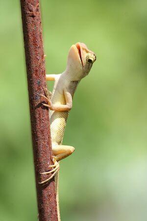 Small lizards  photo