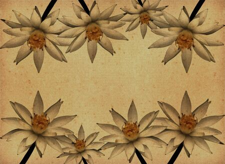 vintage paper textures with Lotus Flowers photo