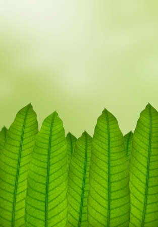 Green leaves with natural background  photo