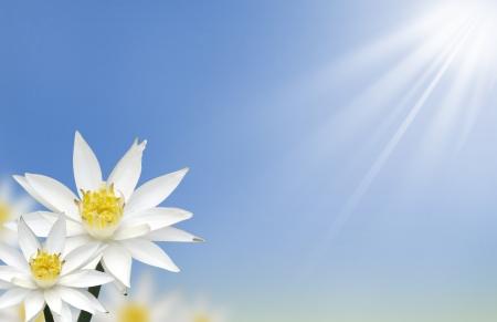 Fiore di loto bianco bella con sfondo naturale  Archivio Fotografico