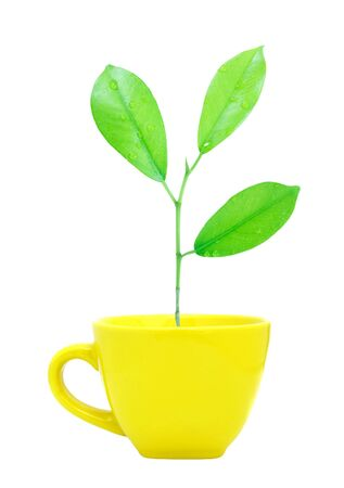 Trees growing in a cup isolated Stock Photo - 9894013