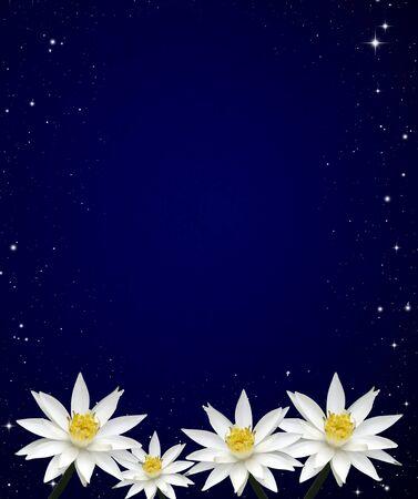 Isolated lotus white night sky background  photo