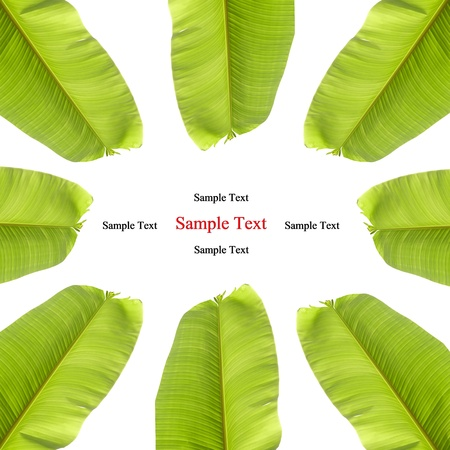 isolated banana leaf on white Stock Photo - 10019960