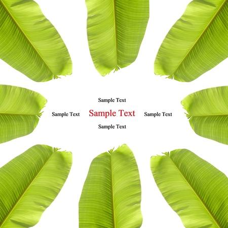 isolated banana leaf on white photo