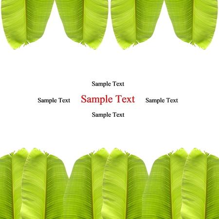 banana leaf: hoja de pl�tano aislados en blanco Foto de archivo