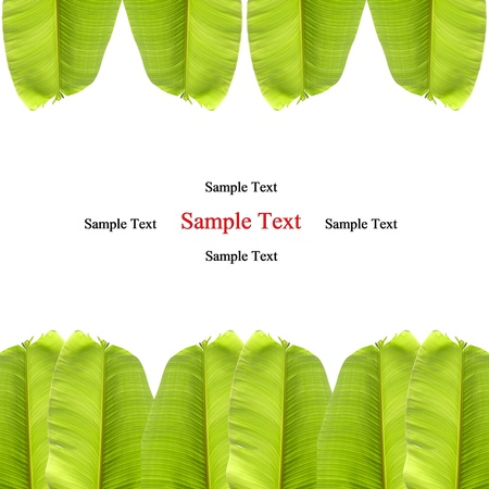 isolated banana leaf on white
