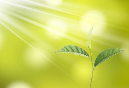 groen blad boom en zon.