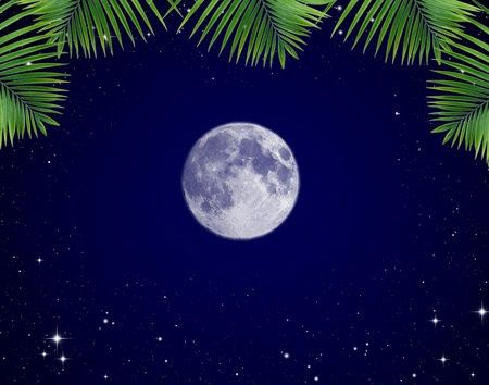 moonlit: Leaves against the night sky