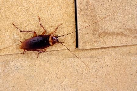 scarafaggi Archivio Fotografico