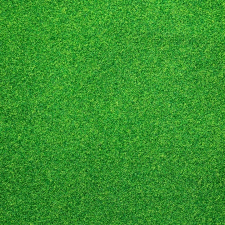 Green grass background Stock Photo - 13468064