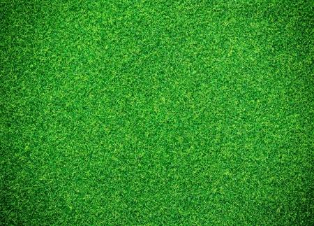 Groen gras achtergrond Stockfoto - 13644442